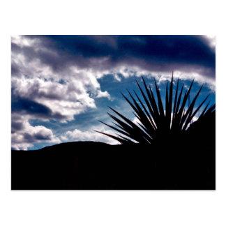 Torry yucca postcard