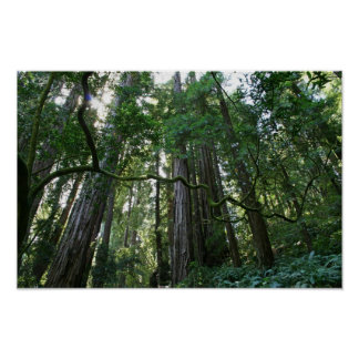 """""""Torsión"""", maderas de Muir Impresiones"""