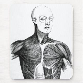 Torso de la anatomía el | B/W del vintage (circa Tapete De Raton