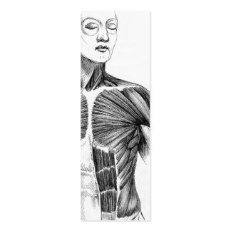 Torso de la anatomía el | B/W del vintage (circa Tarjetas De Visita Mini