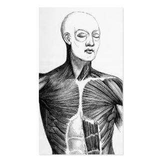 Torso de la anatomía el   B/W del vintage (circa Tarjetas De Visita