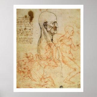 Torso de un hombre en perfil, la cabeza ajustada p póster