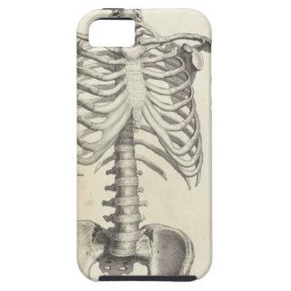 Torso esquelético iPhone 5 protectores