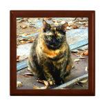 Torti Cat Jewelry Box