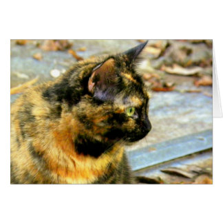 Torti Cat on a Hot Tin Roof Card