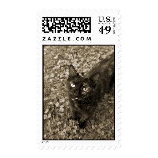 Tortie Cat Postage Stamps