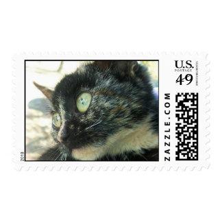 Tortie Kitten Postage Stamp
