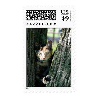 Tortie Postage Stamp