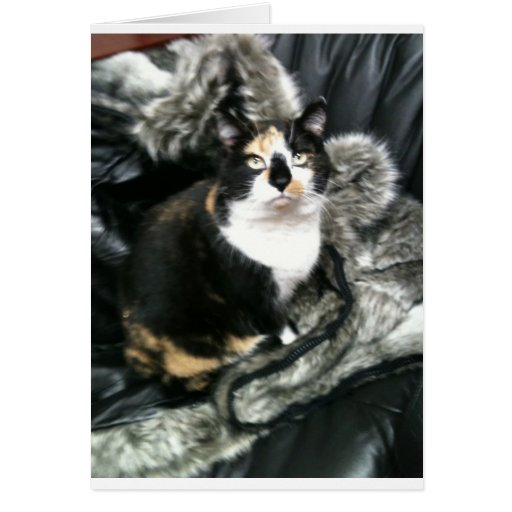 TORTIE THE OFFICE CAT CARD