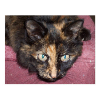 Torties Rule! Postcard