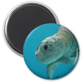 tortoise 2 inch round magnet