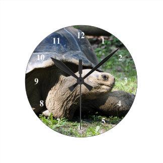 Tortoise 586 Clock