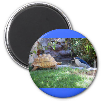 Tortoise and Blue Jay Friends 2 Inch Round Magnet
