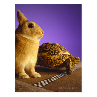 Tortoise and the hare postcard