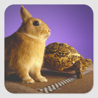 Tortoise and the hare square sticker