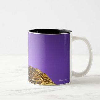 Tortoise and the hare Two-Tone coffee mug