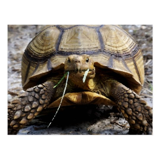 Tortoise Art Cards & Gifts