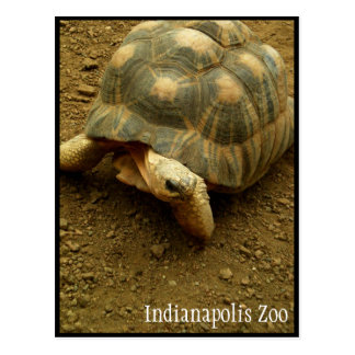 Tortoise at Indianapolis Zoo Postcard