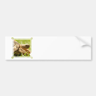 Tortoise Bumper Stickers