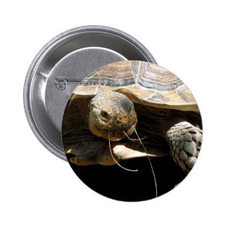 Tortoise Button Pin Party Favors