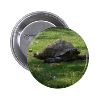 tortoise buttons