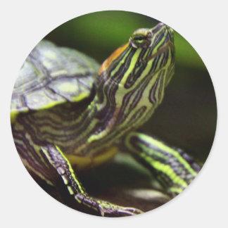 Tortoise Close Up Classic Round Sticker