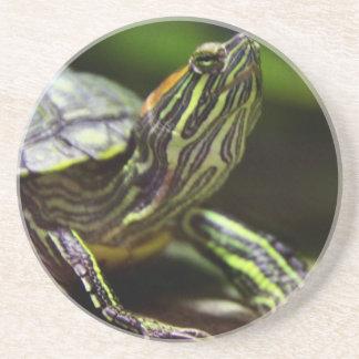 Tortoise Close Up Drink Coaster