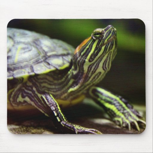 Tortoise Close Up Mouse Pad