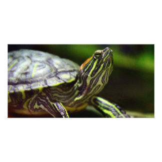 Tortoise Close Up Personalized Photo Card