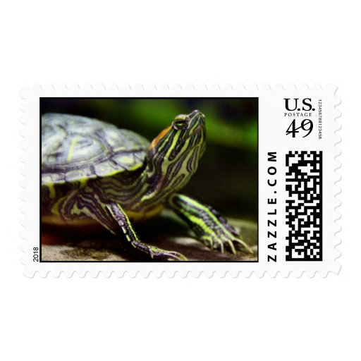 Tortoise Close Up Postage Stamps