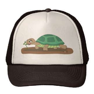 Tortoise eating trucker hat