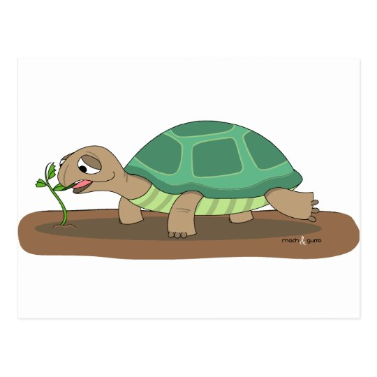 Tortoise eating postcard