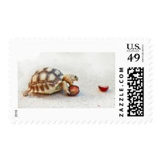 Tortoise Eats a Grape Postage