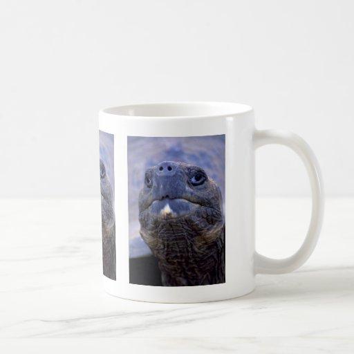 Tortoise face mug
