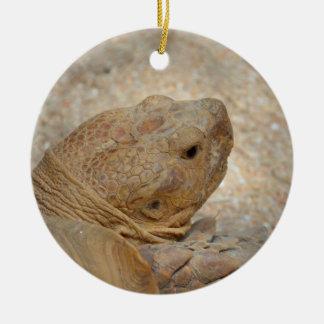 tortoise head close up old turtle ceramic ornament