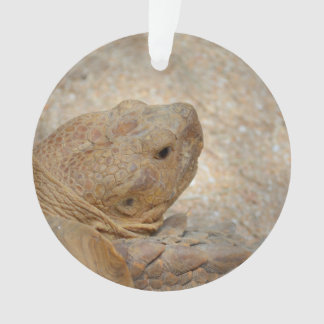tortoise head close up old turtle ornament