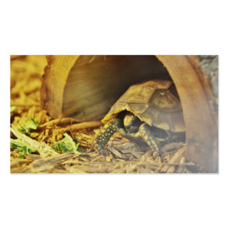 Tortoise hiding in shell 2 business card