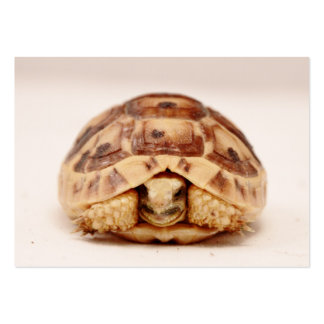 Tortoise hiding in shell business card