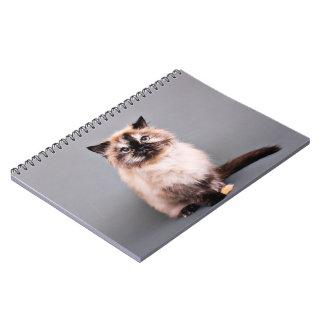 Tortoise Himalayan Cat Portrait Photo Notebooks