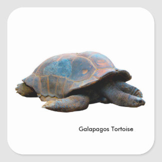 Tortoise image for Square-Stickers-Glossy Square Sticker