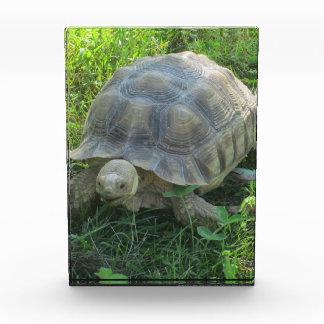 Tortoise in Grass Award