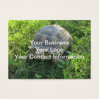 Tortoise in Grass Business Card