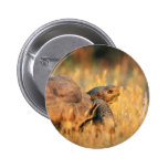 Tortoise in Grass Buttons