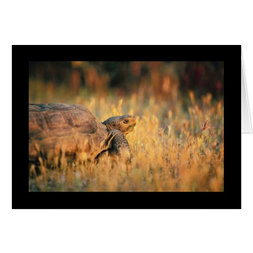 Tortoise in Grass Greeting Card