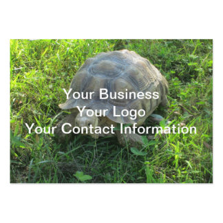 Tortoise in Grass Large Business Card