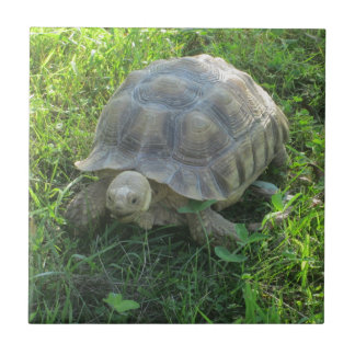 Tortoise in Grass Small Square Tile