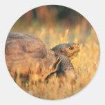 Tortoise in Grass Stickers