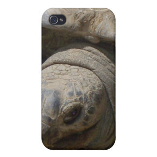Tortoise iPhone 4/4S Cover