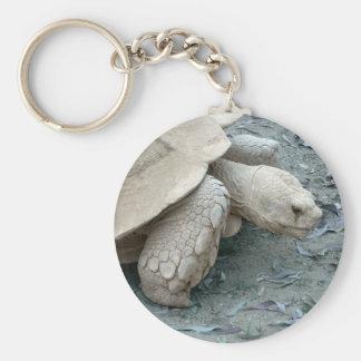 Tortoise Key Chains