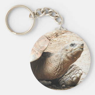 Tortoise Key Ring